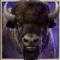 Buffalo symbol